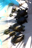 schildkröten stockbilder
