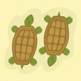 schildkröten Stockfotos