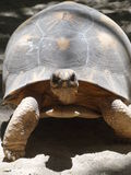 Schildkröten auf dem Strand in Madagaskar Stockbilder