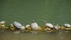 Schildkröten, die auf LOGON-Linie sitzen stockfotos