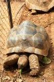 Schildkröten, die in die Natur kriechen lizenzfreies stockfoto