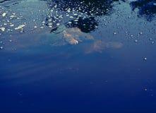Schildkröten, die im Teich verbinden Stockfoto