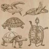 Schildkröten - ein Hand gezeichneter Vektorsatz Stockfotos