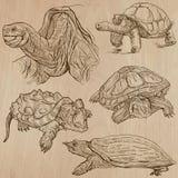 Schildkröten - ein Hand gezeichneter Vektorsatz Lizenzfreie Stockbilder