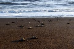 Schildkröten-Freigabe Lizenzfreie Stockbilder