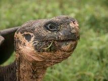 Schildkröten-Kopf Lizenzfreies Stockfoto