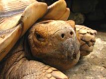 Schildkröten-Nahaufnahme lizenzfreies stockbild