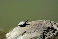 Schildkröten-Sonnen lizenzfreie stockfotos