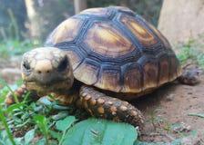 Schildkrötengesicht Stockfoto