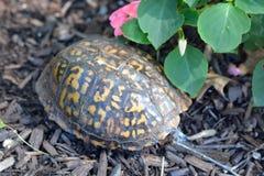 Schildkrötenpanzer im Garten Lizenzfreies Stockfoto