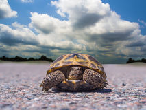 Schildkrötenreisender Stockfoto