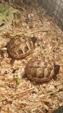 Schildkrötenschildkröten Stockbild