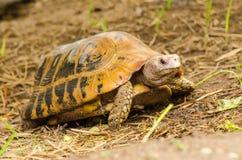 Schildkrötenwild lebende tiere Lizenzfreies Stockbild