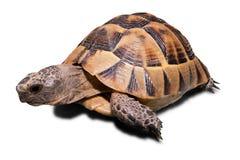 Schildkröte Stockfoto