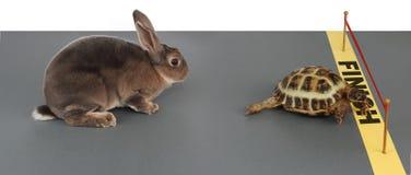 Schildkröte-Hasen Lizenzfreies Stockfoto