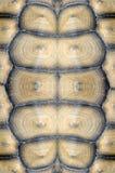 Schildkrötenpanzer. Lizenzfreie Stockfotografie