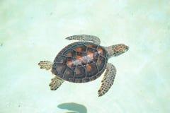 Schildkrötenschildkrötenlebenreptilien marinelife Säugetiere Stockfoto