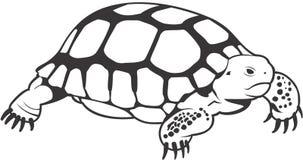 Schildpad stock illustratie