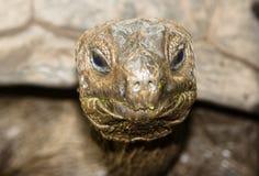 Schildpad stock foto