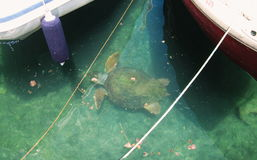 Schildpad in aard Royalty-vrije Stock Fotografie
