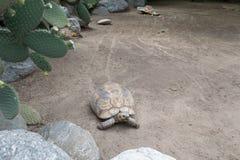Schildpad bij de dierentuin royalty-vrije stock afbeelding