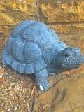 Schildpad die aan steen draaide royalty-vrije stock afbeelding