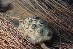 Schildpad die aan zijn huis lopen royalty-vrije stock afbeeldingen