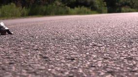 Schildpad die de weg kruisen stock videobeelden