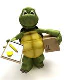 Schildpad die een pakket levert Stock Foto