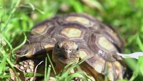 Schildpad die lucht en zon nemen stock videobeelden