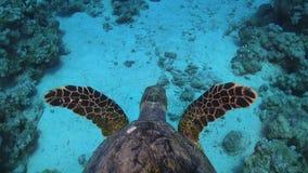 Schildpad die over Coral Reef zwemmen stock footage
