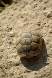 Schildpad die vuilstapel beklimt Royalty-vrije Stock Foto