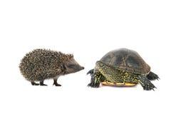 Schildpad en egel royalty-vrije stock foto