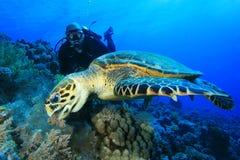 Schildpad en Scuba-duiker Royalty-vrije Stock Fotografie