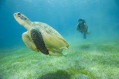 Schildpad en Scuba-duiker Stock Afbeeldingen