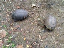 Schildpad in het park Royalty-vrije Stock Foto's