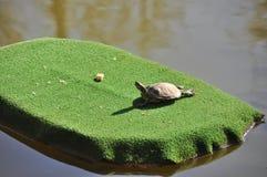 Schildpad het Zonnebaden Stock Afbeelding