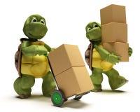 Schildpad met dozen voor het verschepen Royalty-vrije Stock Afbeeldingen