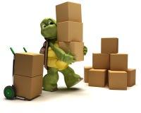 Schildpad met dozen voor het verschepen Stock Foto