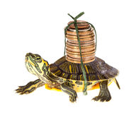 Schildpad met geld Royalty-vrije Stock Fotografie