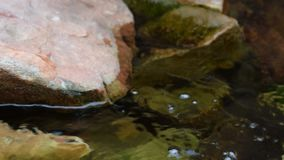 Schildpad met rode Amerikaanse oren, stock footage