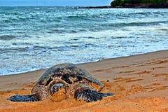 Schildpad onbeweeglijk Royalty-vrije Stock Foto's