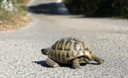 Schildpad op de weg Royalty-vrije Stock Afbeeldingen