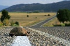 Schildpad op de weg Royalty-vrije Stock Foto's