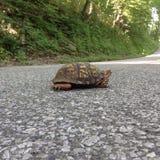 Schildpad op de weg Stock Foto