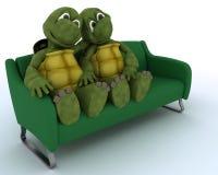 Schildpad op een bank Stock Foto's