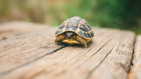 Schildpad op een houten straal Stock Afbeeldingen