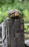 Schildpad op een Omheining Post royalty-vrije stock fotografie
