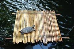 Schildpad op een vlot in het midden van het meer royalty-vrije stock foto