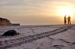 Schildpad op het strand van Oman stock afbeeldingen